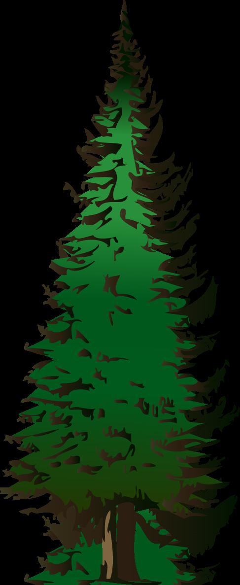 Evergreen Tree Image - evergreen-tree.png