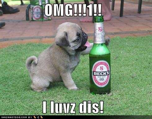 Image - Funny-dog-pictures-pug-loves-beer.jpg - Animal Crossing City ...