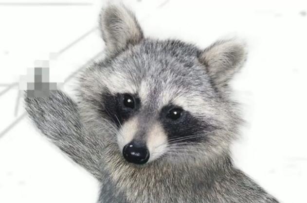 Raccoon_5.jpg