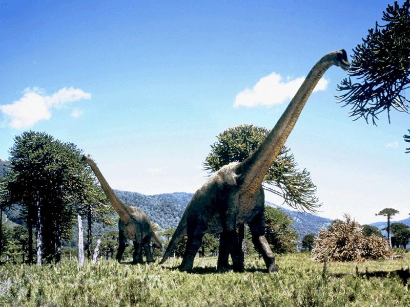 Favorite Dinosaur Browsing_brachio%27s