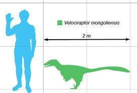 Image - Velociraptor size comparison.jpg - Dinopedia - the ...