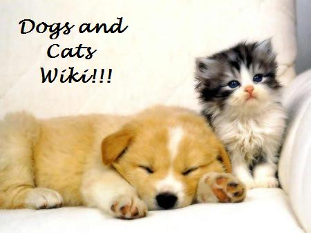 pictures of dogs and cats. Denny60643 Dogs and Cats Wiki.