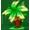 tropic type