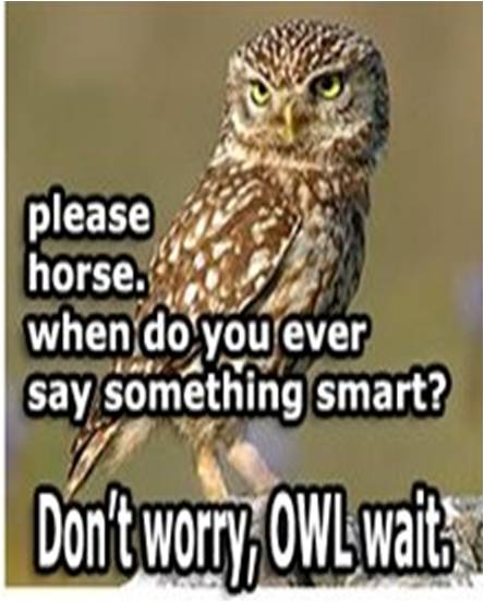 owl humor reading - photo #11