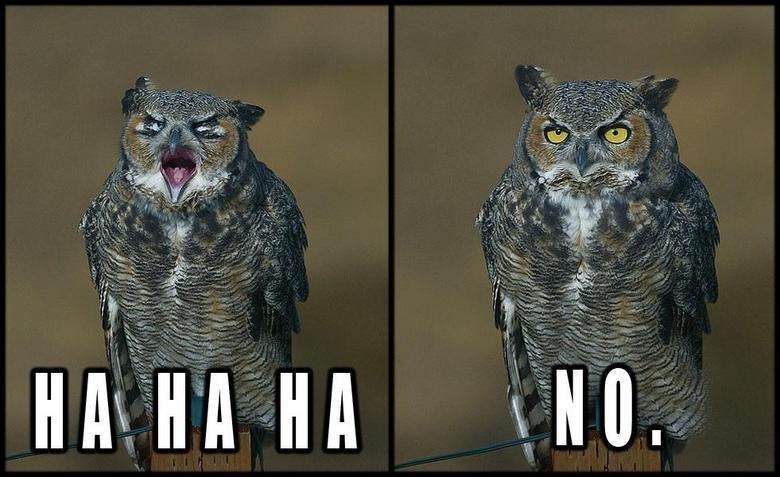 owl ha ha ha no