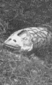 http://images.wikia.com/fantasia/pt/images/8/8b/Tatzelwurm2.jpg