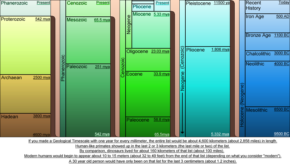 geological time scale activity. Geologic time scale - Fossil