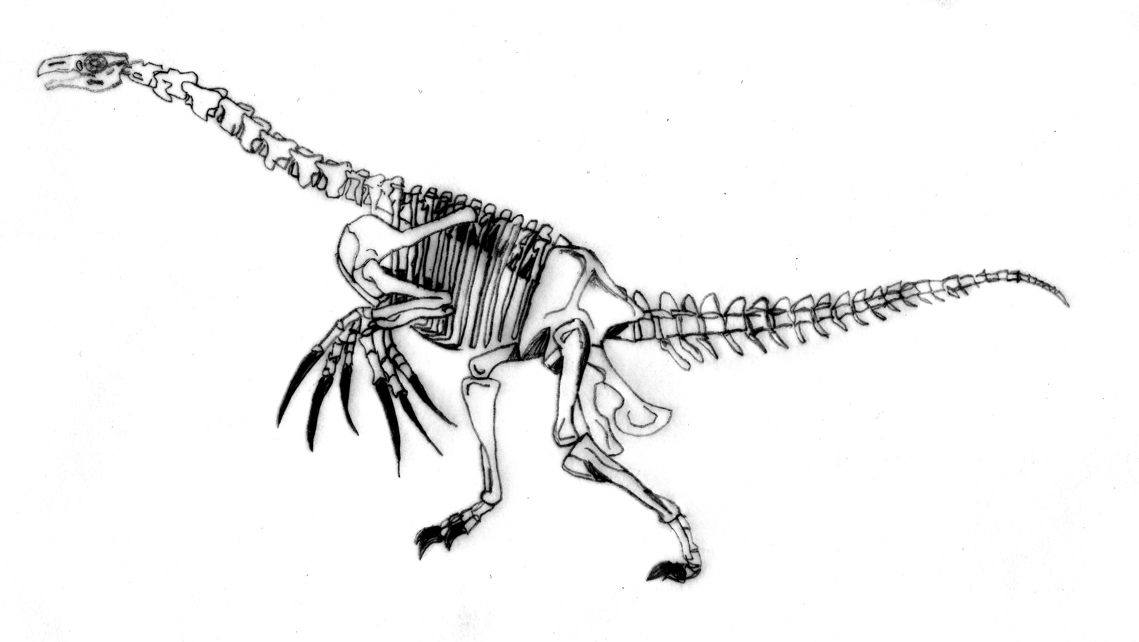 http://images.wikia.com/fossil/images/d/dc/Therizinosaur_skeleton.jpg