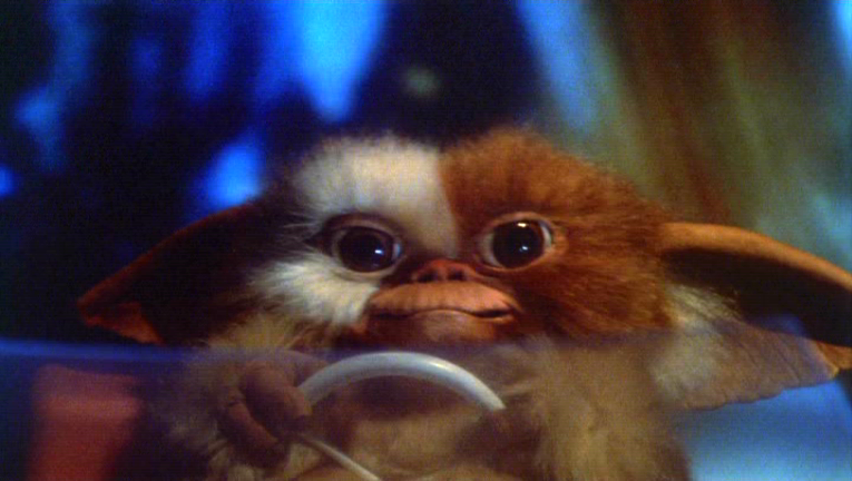 http://images.wikia.com/gremlins/images/b/ba/Gizmo-First.PNG