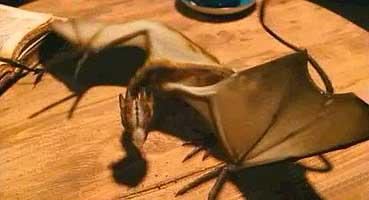 Rubeus Hagrid's pets - Harry Potter Wiki