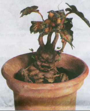 harry potter mandrake gifs