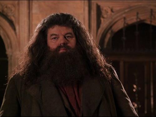 Image - Hagrid returns.jpg - Harry Potter Wiki