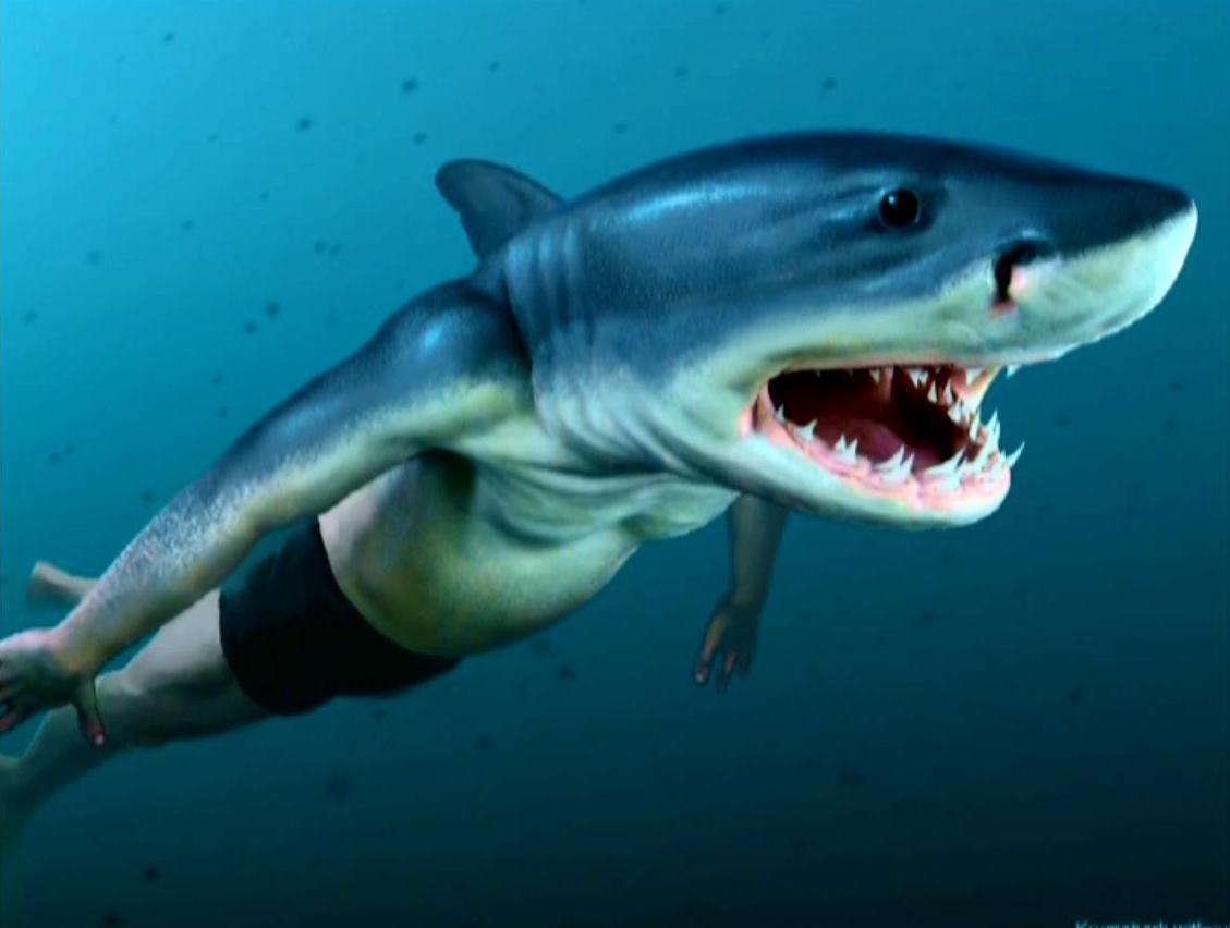 a capital wasteland: Sharks are the stupidest animals. I ... |Half Human Half Shark