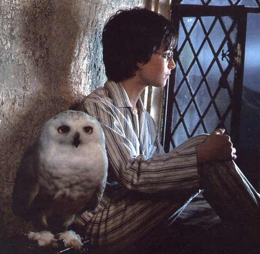 Harry-potter-and-hedwig.jpg (513×500)