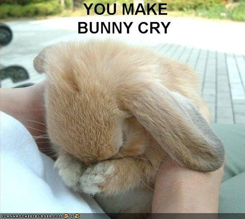 Funny Sad Bunny