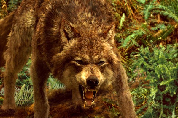 Ficha de Jake (Saevic) Jacob_black_wolf_new_moon