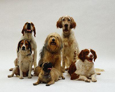 Animales: Los perros Perrosportada