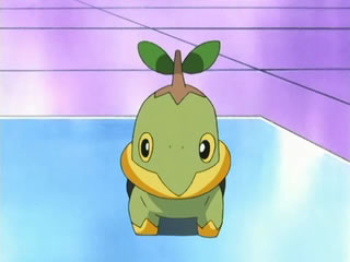 pokemon sinnoh adventures Silus's_Turtwig
