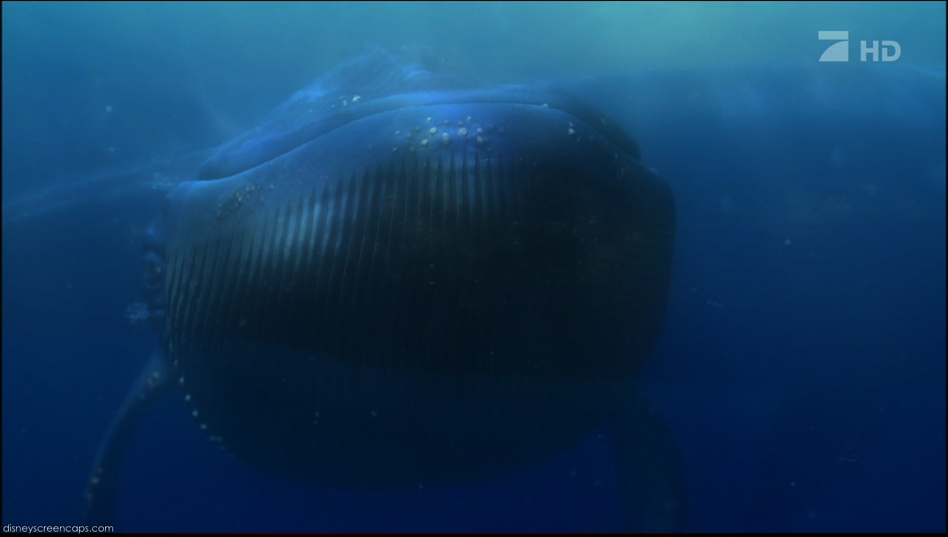 Image - Nemo-disneyscreencaps.com-7218.jpg - Pixar Wiki ...