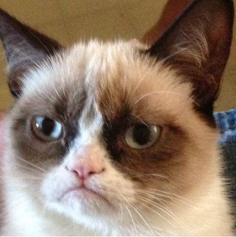 Grumpy_catt.png