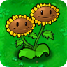 Twin_Sunflower1.png