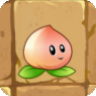 Peach_new.png