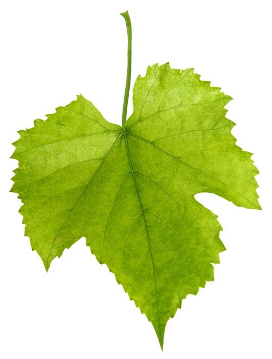 Glass Anchor Hocking, Milk Glass, Grape & Leaf Pattern, Grapes