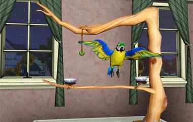Отпускайте больших птиц полетать и размять крылья.  Стоит открыть клетку...