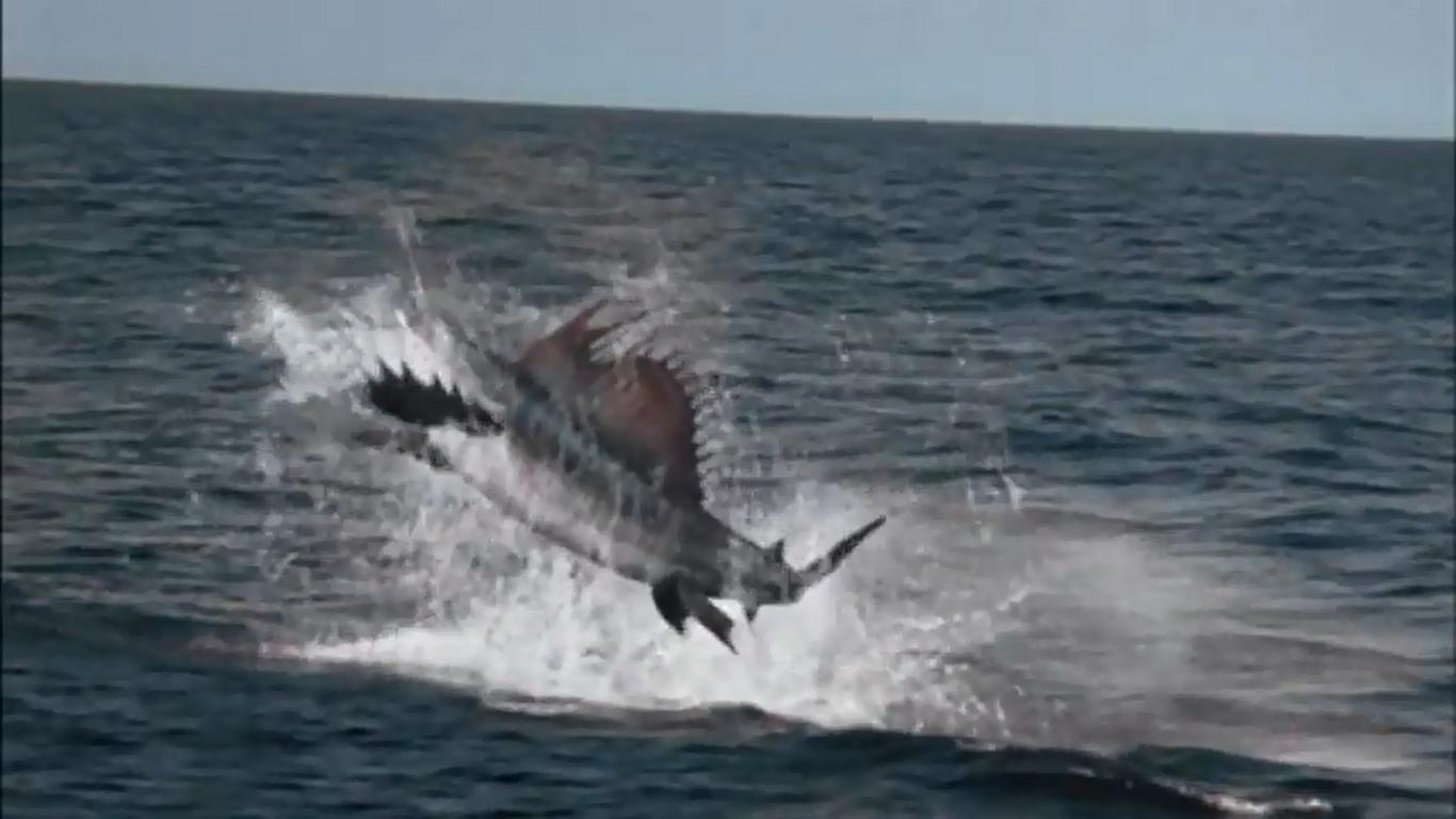 http://images.wikia.com/terranova/images/6/69/Swordfish1.jpg