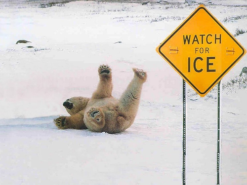 Funny-animal-signs-1