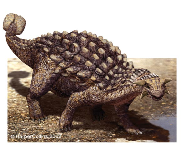 ankylosaurus 