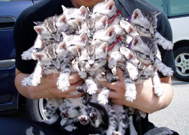 http://images.wikia.com/uncyclopedia/images/7/76/Tastykittens.jpg