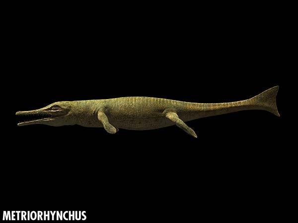 Metriorhynchus_closeup.jpg