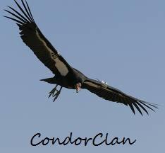 CondorClan.jpg