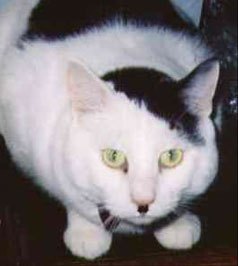 http://images.wikia.com/wikiality/images/b/b3/Hitler_cat2.jpg