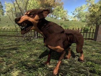 Days To Die Zombie Dogs Farm