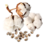 CottonSeed.png