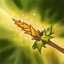 Nature's Culling Icon.png