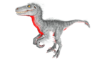 Raptor PaintRegion5.jpg