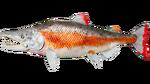 Salmon PaintRegion5.jpg