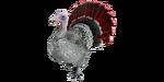 Turkey PaintRegion1.jpg