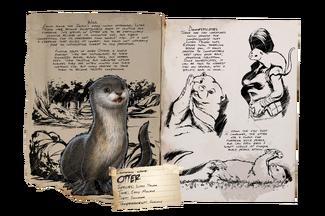 Dossier Otter.jpg