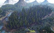 Redwood Forests.jpg