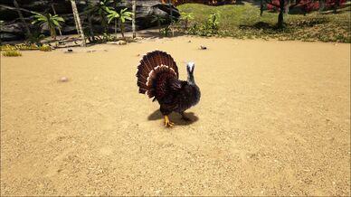 Super Turkey.jpg