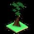 Kapok Tree.png