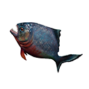 Icon rawBadFish.png