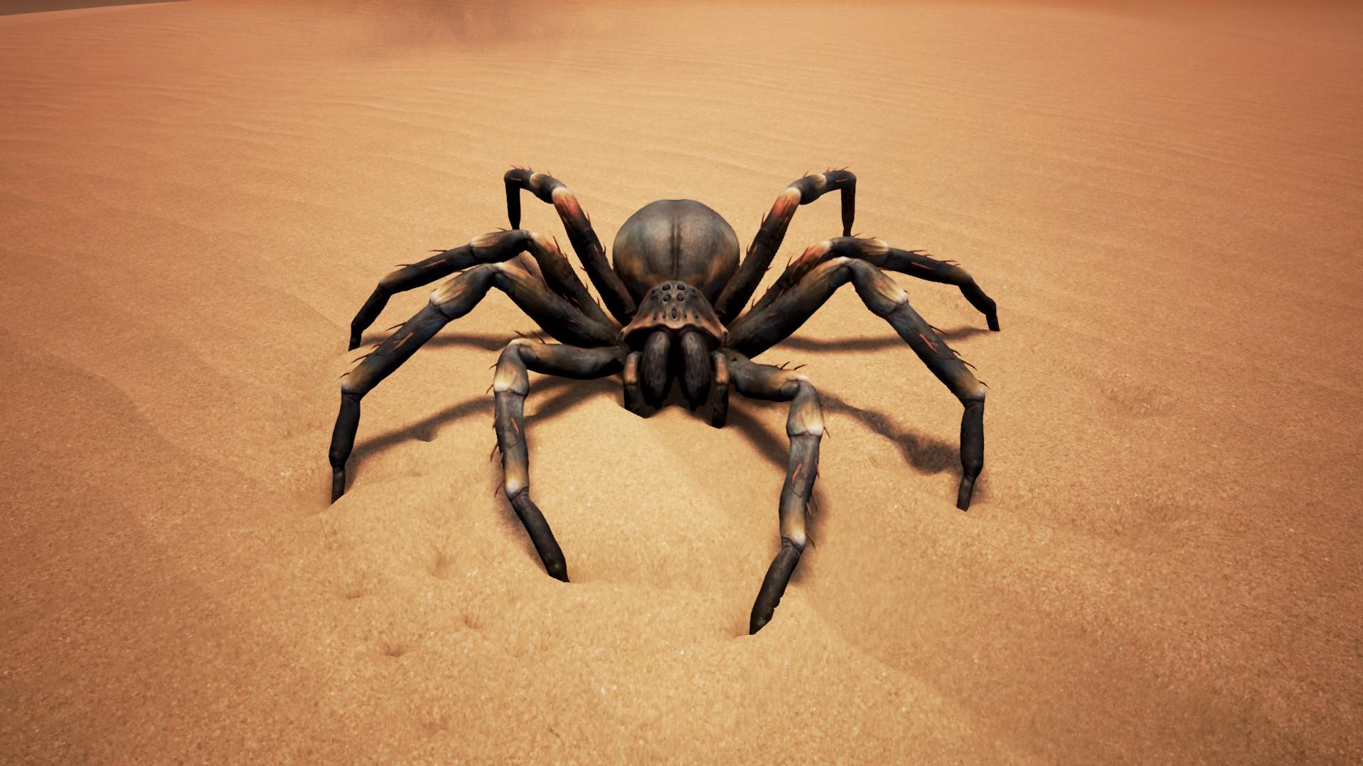 Brown Spider.jpg