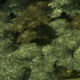 Temperate Forest.png