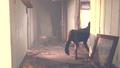 Fallout4TrailerAn015.png