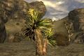 FNV Yucca.png